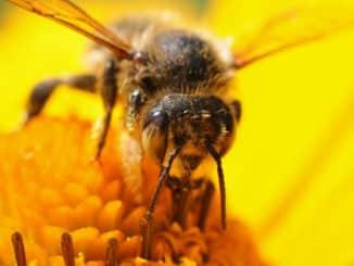 Honig, Bienen und Imkerei – Schnupperkurs in Dierdorf