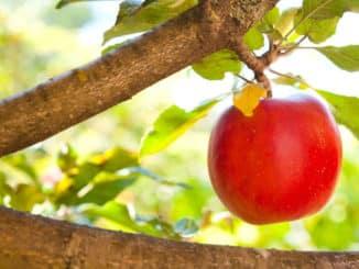 Obstbaumschnitt Altenkirchen