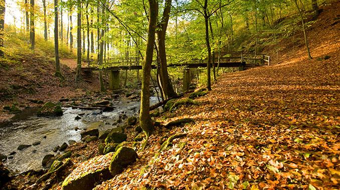 Westerwaldsteig-Herbst-Holzbachschlucht-38-678