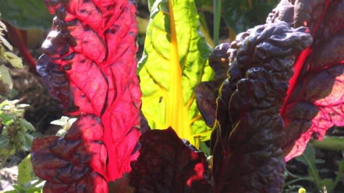 KVHS Bio Gemüsegarten