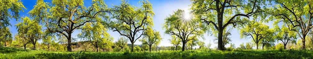 Streuobstwiese - Westerwälder Ernte